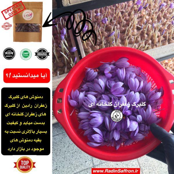 گلبرگ زعفران گلخانه ای