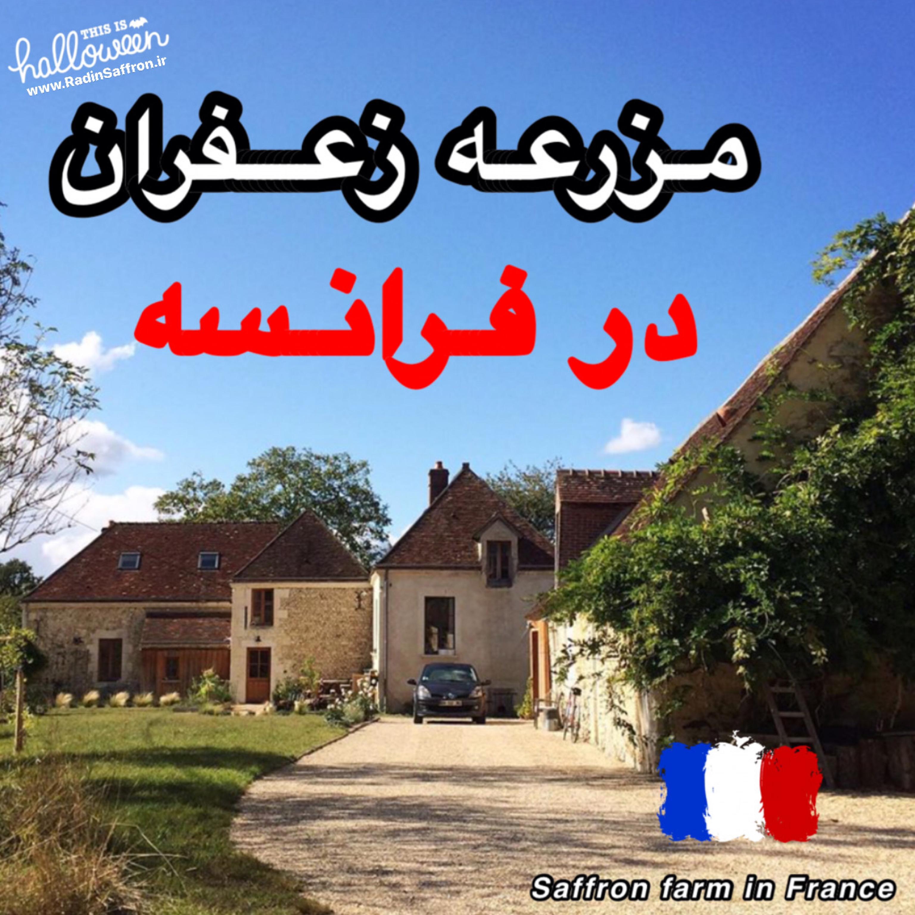 مزرعه زعفران در کشور فرانسه