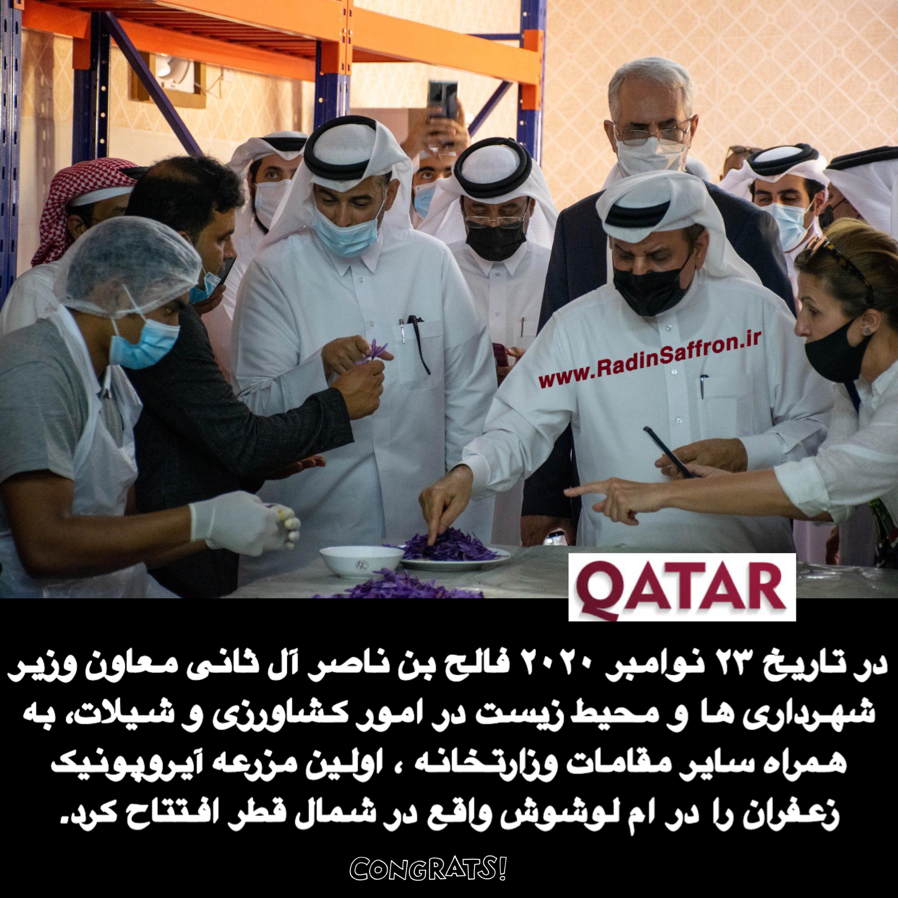 زعفران گلخانه در قطر