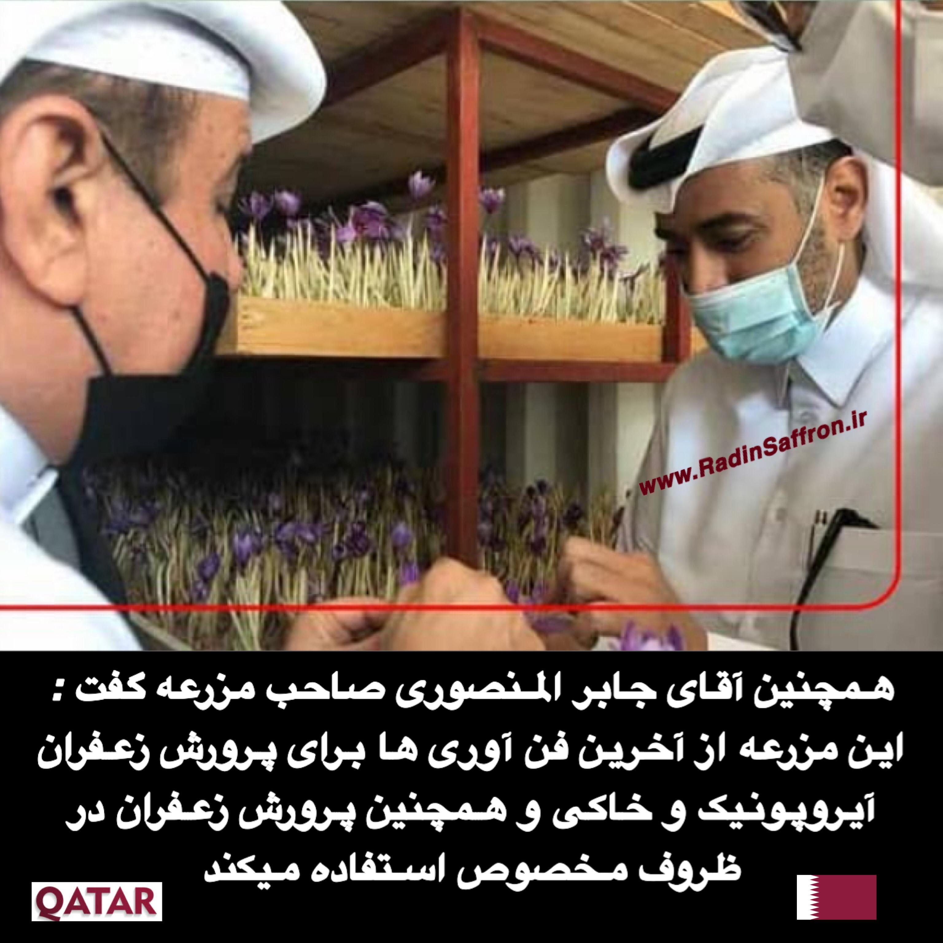 آموزش کاشت زعفران گلخانه ای در قطر