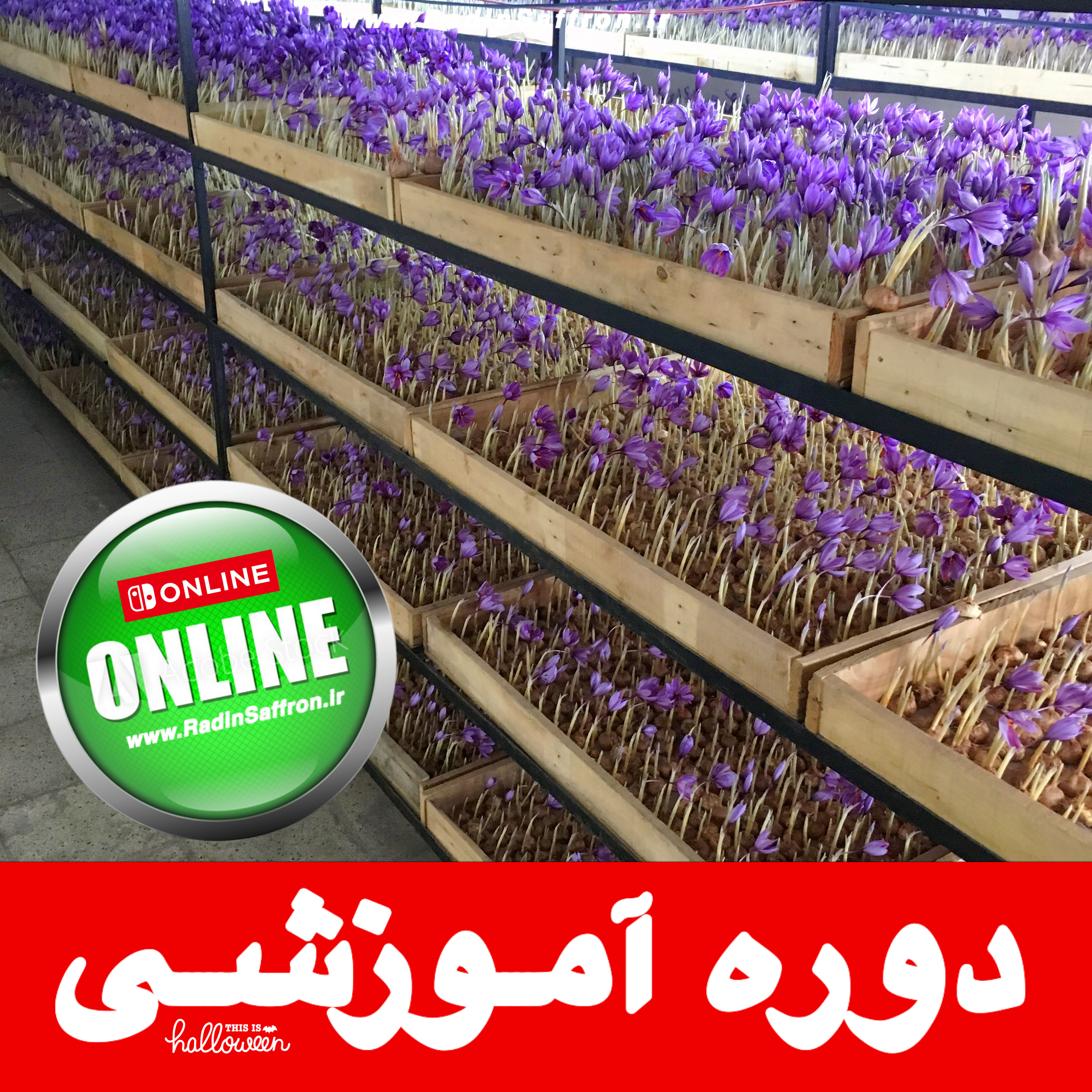 آموزش آنلاین زعفران