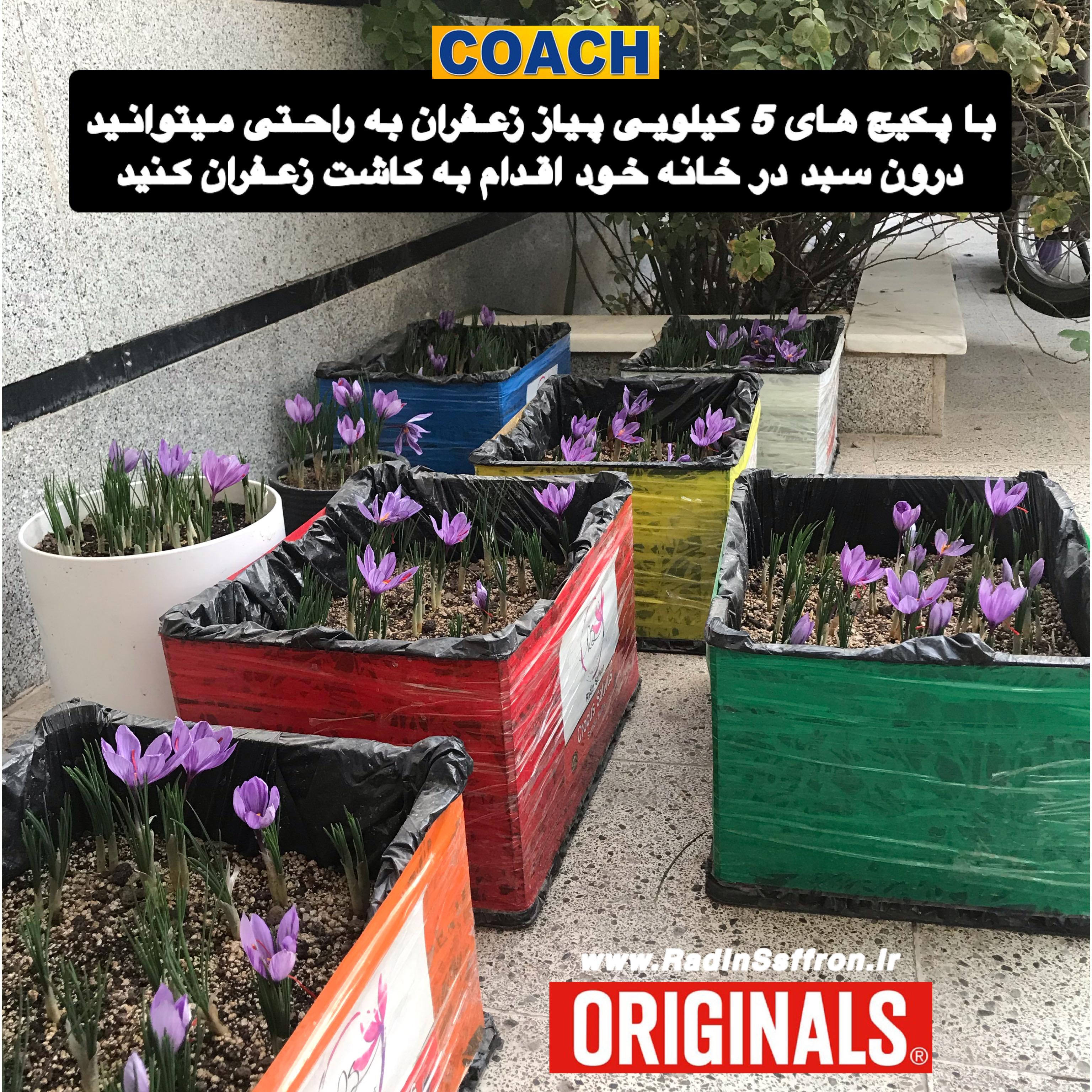 آموزش کاشت زعفران در سبد